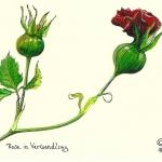 simone_frieling_postkarten_004